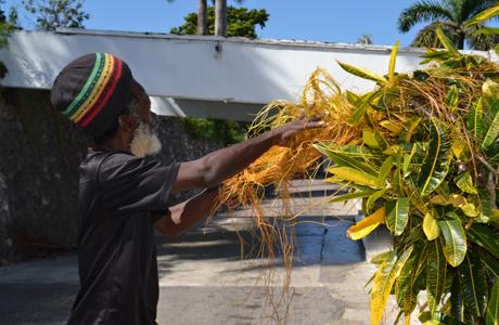 Love Bush Montego Bay Jamaica