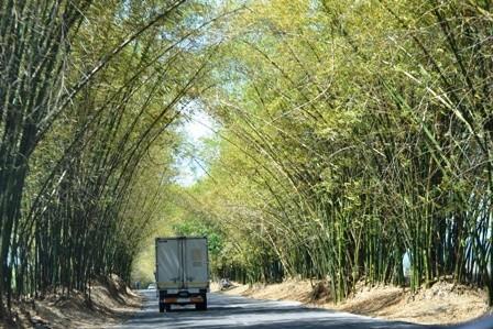 Bamboo Avenue, St. Elizabeth, Jamaica